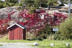 Utgårdskilen 2.18, Hvaler, Norway (Knut-Arve Simonsen) Tags: utgårdskilen vesterøy hvaler norge норвегия norway noruega norwegen norvegia norvège नॉर्वे 挪威 ノルウェー நோர்வே νορβηγία sydnorge sørnorge østlandet glomma oslofjorden østfold norden scandinavia скандинавия э́стфолл фре́дрикстад гло́мма ослофьорд vann hav benk gress tre hytte brygge water sea tree cottage pier banco de mar agua hierba árbol cabaña muelle wasser meer hütte acqua molo mare