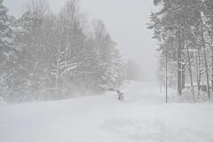 100% vinter 12/12 2012. (johnerlandaxelsson@gmail.com) Tags: ljusne söderhamn hälsingland sverige vinter natur landskap landscape johnaxelsson