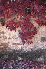 Últimos colores de otoño (Kasabox) Tags: color colour hoja leaf otoño fall autumn rojo red natura nature naturaleza