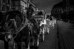 Krakow_ (@Mlk_Dahoui) Tags: horses blackandwhite city horse animal light street photo art winter christmas bw car new nikon nikond750 cobbles sky picture photography beauty church nice poland krakow travel time old people driver woman girl