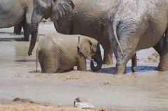 Südliches Afrika - September 2019 (O!i aus F) Tags: afrika namibia etosha park nationalpark tiere osm k5