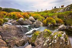 Allihies - Beara Peninsula - Ireland 2018 (Wilma v H- Happy New Year!!) Tags: allihies ballydoneganbeach bearapeninsulaireland westcork ireland rivers streams cows longexposure tokinaatx1228f4prodx canoneos60d luminositymasks tkactionsv7panel waterscapes rocks rockpools irishlandscape landscapes eire outdoors 2018