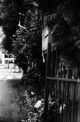 好気性 (aerobic) (Dinasty_Oomae) Tags: argusc3 argus アーガス アーガスc3 白黒写真 白黒 monochrome blackandwhite blackwhite bw outdoor 東京都 東京 tokyo street 千代田区 chiyodaku