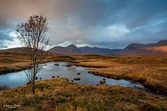 Rannoch Moor - Loch Ba - mit Baum (AnBind) Tags: schottland ereignisse fotoreise caledonia scotland 2019 highlands urlaub