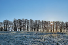 Merry Christmas! (scottprice16) Tags: england lancashire clitheroe ribblevalley morning light shade sunrise pendlehill moorlands field trees shadows frost cold winter 2019 canon canoneos6d 50mm prime 50mmf14 colour merrychristmas