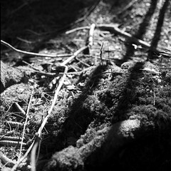 IMG00000000000000000000000000000067 (borealis lysfanger) Tags: skogen skogsterreng din21 agfa agfapan apx 100 120 6x6 mellomformat medium format square squareformat svarthvitt svarthvittfoto filme analog analogphotography foto bw blackandwhite grayscale tonality kontrast rolleiflex k7f 80 landskap landscape natur nature iso100 franke heidecke 28c braunschweig tysk kamera planar carl zeiss