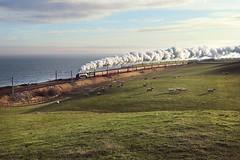 60163 Lamberton (In Search Of Steam) Tags: 60163 tornado lamberton east coast mainline railway touring company