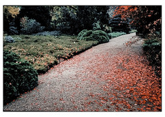 (schlomo jawotnik) Tags: 2019 november hannover herrenhäusergärten berggarten weg kies park garten laub pflanzen bäume büsche gewächs film analog kodak kodakproimage100 usw