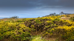 Yellow Sizewell (Aron Radford Photography) Tags: yellow sizewell suffolk east anglia coast beach gorse sand sea water shore shrub dune