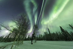 Aurora and moon (yan08865) Tags: alaska nightphotography fairbanks wow outdoor nature winter pavlis landscapes night borealis lights northern natural colors pics photos shots alaskan usa aurora sky tree forest wild stars trees light auroras snow bright wide ultra