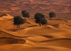 Endurance (felixindenvisuals) Tags: ghaf tree desert dubai uae prosopiscineraria plant dune sun sand wüste wueste overlanding offroad jeep travel nature landscape photography nikon d850 nikkor 200500