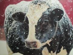 A  Peaceful  Christmas  for  Everyone  !!! (excellentzebu1050) Tags: christmas cow animal snow christmas2019 christmaswishes farm dairycows dairyfarm animalportraits cattle closeup coth5