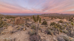 Mojave Morning (magnetic_red) Tags: desert sunrise sky clouds pink beautyinnature mojavenationalpreserve joshuatrees yucca landscape