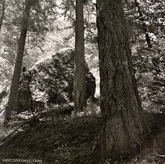 Trailside, Columbia Gorge, Oregon (Gary L. Quay) Tags: columbiagorge oregon pacificnorthwest hiking film hassleblad ilford xp2 tree boulder sunlight mediumformet filmphotography spring garyquay bridalveil usa