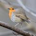Round Robin (little IT joke) 😂