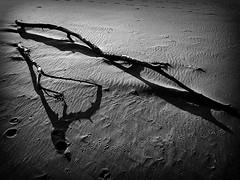 ombtronco Spiaggia (Antonio Piccialli) Tags: 2019 dicembre dmclx100 dimostrazione dettaglio onda ops ombra blackandwhite bianconero blackwhite bn bw autunno inverno spiaggia riflessi wave winter explore explored flickr flickrclickx