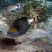 Titan Triggerfish & Friends
