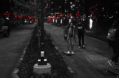 Skateboarding Along the Park (Anthony Mark Images) Tags: blackandwhite monochrome selectivecolour skateboards friends trio 3girls students female babystoller ladies skateboarding night evening redlightsmedian trees waterloopark waterloo ontario canada holidaylights christmas nikon d850 flickrclickx