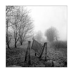 Entrance (K.Pihl) Tags: berggerpancro400 gate fog landscape monochrome trees hasselblad500cm film hc110b blackwhite distagon50mmf40 bw pellicolaanalogica analog schwarzweiss