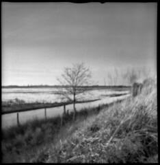 2604 Marsh View. (Monobod 1) Tags: lomo dianaf pinhole lensless ilford hp5 rodinal epsonv800 bw
