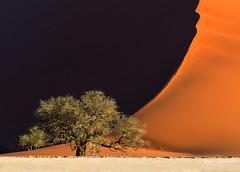 Peaceful tree (Jerzy Orzechowski) Tags: shadows sossusvlei sand landscape sunset namibia trunk tree orange dunes