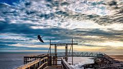 Heron Takes Flight (LDMcCleary) Tags: beach ocean waves pier goldenhour sunset heron flying surf texas gulfcoast bird matagorda