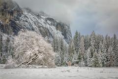 Fresh Snow, Cook's Meadow (optimalfocusphotography) Tags: northerncalifornia california usa sky landscape winter tree nature nationalpark cooksmeadow yosemitenp clouds yosemitenationalpark sierranevada yosemite snow