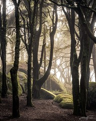Trees and rocks (jorgeverdasca) Tags: autumn moss forest woodland rocks trees mist goth nature sintra portugal