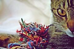 Sin pirotecnia (-Ana Lía-) Tags: gata flickr pirotecniacero personanohumana nikon prohibición protección autismo personas gatti chats dulce loly imagen luz analialarroudé ojos mirada enigma