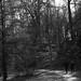 Leica iii_024