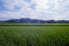 Fields (OzGFK) Tags: 135 35mm asia kodakultramax korea nikonfm2n southkorea analog film travel andong countryside fields farming 2019