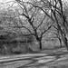 Leica iii_019