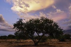 QS9A6599 (Stormchase73) Tags: lightning arizona monsoon haboob canon canon7d sunset