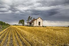 Casita de campo en......... (Marina-Inamar) Tags: perezmillan argentina buenosaires campo campestre sembrado sembradío cosecha casa nubes