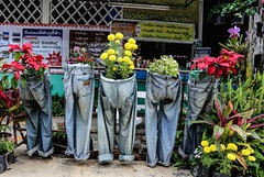 Flowering Denim (kiwi photo lover) Tags: streetphotography street quirky jeans denim worn plants flowers recycled thailand