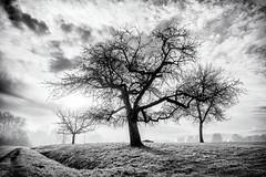 Morning's Glory... (Ody on the mount) Tags: anlässe blackwhite bäume em5iii fototour himmel landschaft mzuiko124028 nebel omd olympus pflanzen silhouette solitär sonne wolken bw blackandwhite clouds fog landscape miraclesofcreation monochrome sw savingtheclimatebytrees schwarzweis sky sun trees