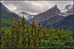 mountain meadow (Bluescruiser1949) Tags: mountain rockymountains britishcolumbia colourlandscapephotography colourphotography meadow photoop landscape landscapephotography simplysuperb rainclouds