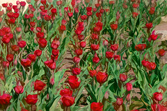 Tulip impasto (Pejasar) Tags: artistic art paintcreations painterly garden soring flowers blooms tulips red