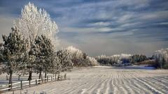 frimas du matin au Saguenay (gaudreaultnormand) Tags: blanc calme campagne champ frimas froid frost lumière matin saguenay