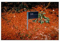 (schlomo jawotnik) Tags: 2019 november hannover herrenhäusergärten berggarten weg laub paradies himmel hölle wegweiser rot gebüsch zweige film analog kodak kodakproimage100 usw