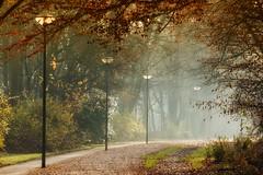 Sunday walk... (Zoom58.9) Tags: trees park light fog way nature autumn bäume licht nebel weg natur herbst canon canoneos50d sigmaapomacro150mmf28exdghsm