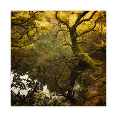 Reflected Gold (gerainte1) Tags: woodland trees autumn colour water