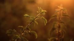 *** (pszcz9) Tags: przyroda nature natura naturaleza zbliżenie closeup bokeh beautifulearth sony a77