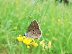 Butterfly 1906 (+1800000 views!) Tags: butterfly borboleta farfalla mariposa papillon schmetterling فراشة