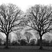 Tree twins (black'n white)