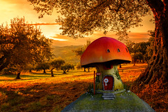 I Wish You All A Warm Christmas At Home (Alfred Grupstra) Tags: nature tree autumn outdoors forest sunset landscape orangecolor grass season sky sunlight parkmanmadespace cultures red dusk scenics lightnaturalphenomenon greencolor sun warm christmas fantasy christmaspicturegallery