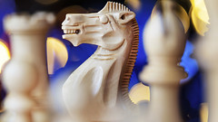 The Knight before Christmas (Sean Hartwell Photography) Tags: chess christmas knight pieces bokeh