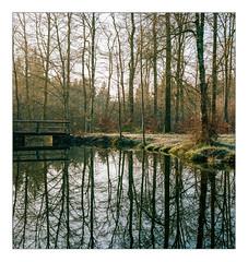 Early winter morning at forest pond (werner-marx) Tags: analog film meinfilmlab mediumformat agfaisoletteiii solinar kodakportra160 kellamsee winter