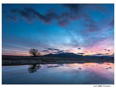 Lonely tree (Ignacio Ferre) Tags: embalsedesantillana santillanareservoir manzanareselreal madrid españa spain sunset puestadesol anochecer naturaleza nature lago lake nikon azul blue