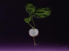 Viola... (Antonio Iacobelli (Jacobson-2012)) Tags: radish section vegetable purple godox bari fujifilm fujinon 120mm mediumformat